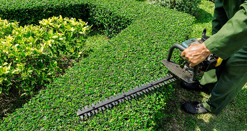 hedge trimming rates explained